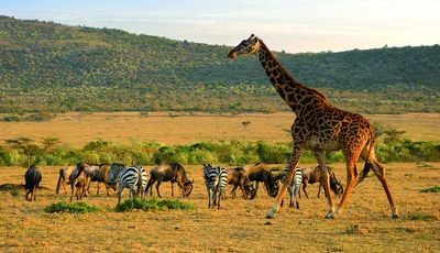 Kenia-Tanzania